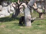 В Китае обезьяна повеселила.