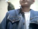 Сидим на руке,на плече(Венесуэльский Амазон-Шрек)