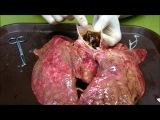 反吸煙宣傳--豬肺吸煙 smoking pig lung(未修訂版) @ tcy